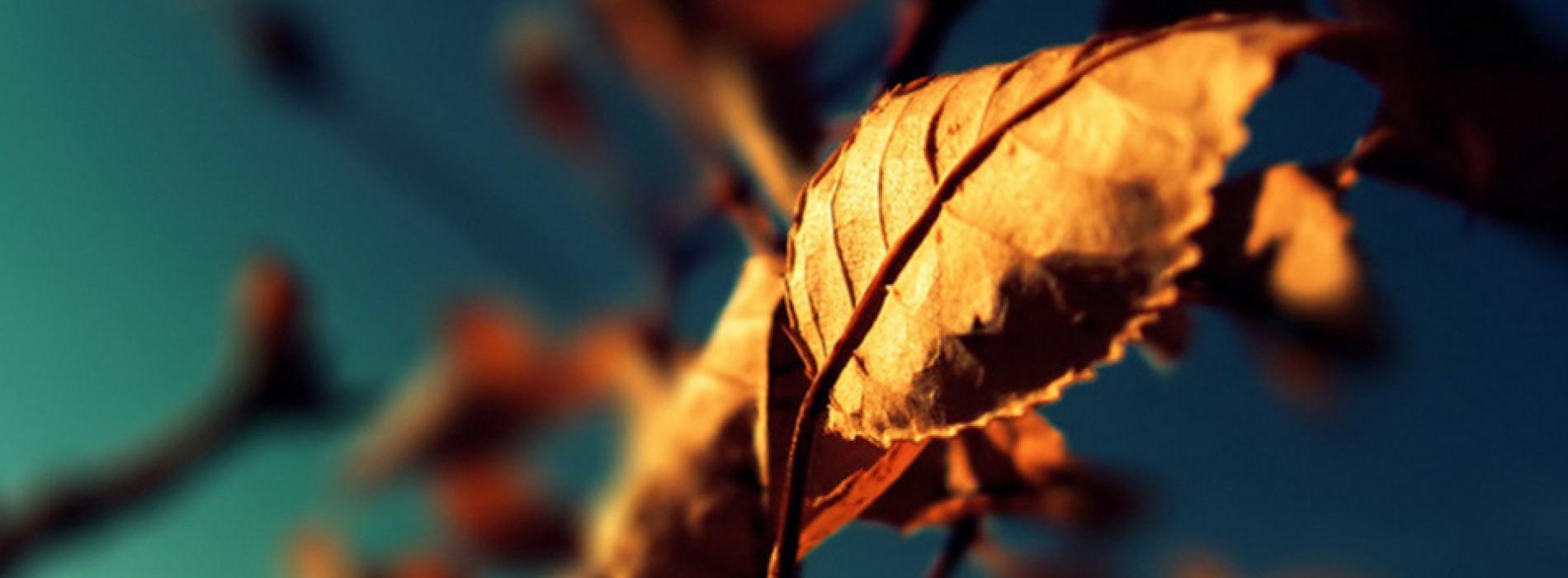20 صورة | nature wallpaper | خلفيات طبيعه