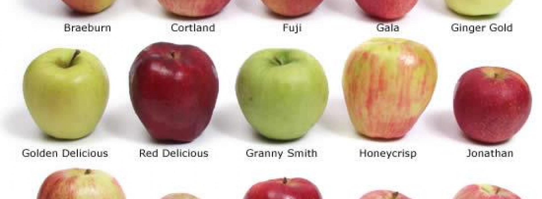 صورة | أنواع التفاح